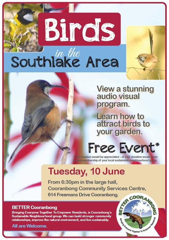 Poster for Birds in the Southlake Area event - details in text below